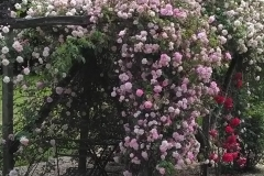 rosier cécile brunner