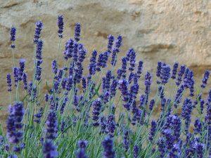 un jardin bleu