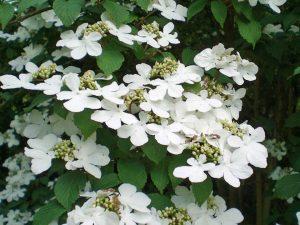 un jardin blanc