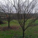 arbres fruitiers l'hiver