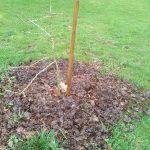 plantations arbre et paillage