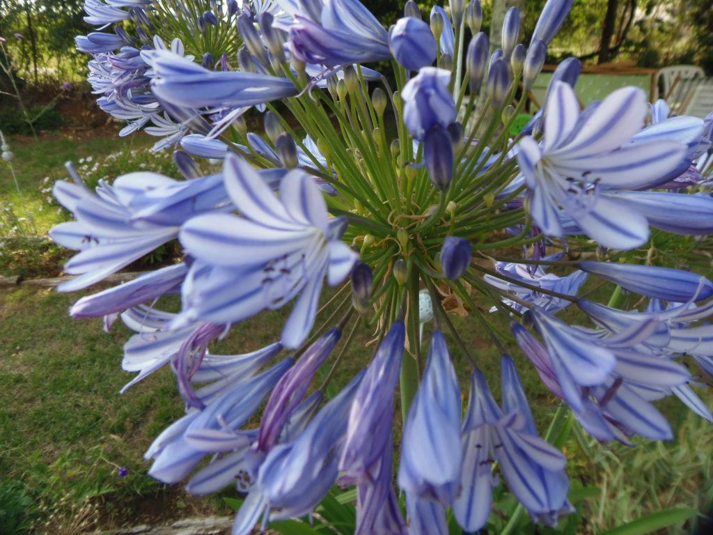 Plantes Pour Talus Sec pour un jardin presque sans arrosage - les jardins de phocas